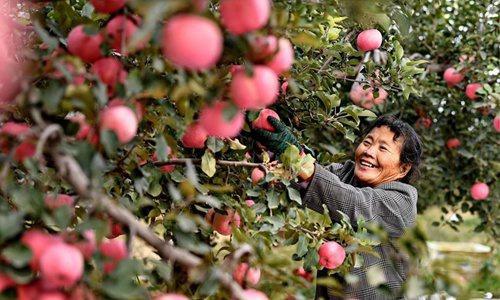 Ngôi làng ở Trung Quốc tổ chức sự kiện giống Apple để bán táo. Ảnh 2.